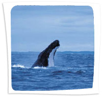 Whale_Watching_Augusta-1