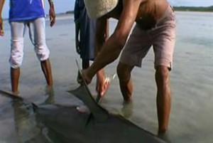 shark_finning