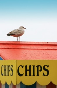 The seagull waits for leftovers