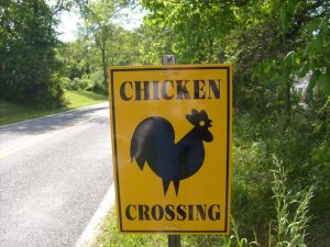 A chicken that crosses the road can no longer be called chicken!